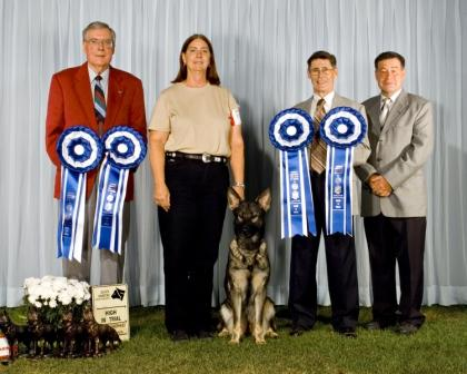 Feeby vom Mika-Ashmead receiving 4 High in Trials at Canadian National