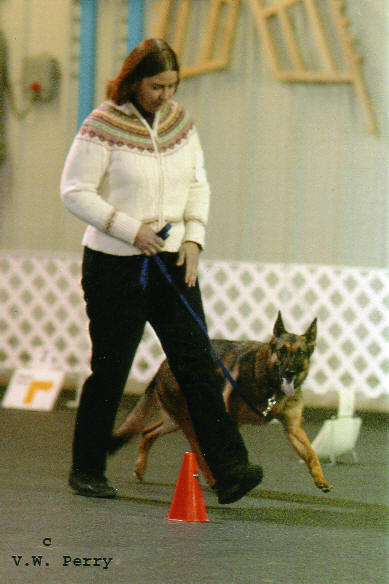 Kath Cook and Gidget vom Mika-Ashmead doing AKC Rally